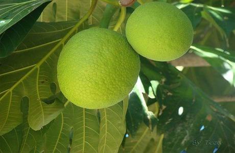fruta-pao